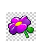 Bouquet naturel: un cadeau insolite de fleur ou de flore pour les mains vertes