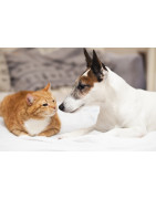 A gift from Gifts-custopolis for fans or for your pet to show your gratitude.